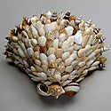 SHELL WALL SCONCES